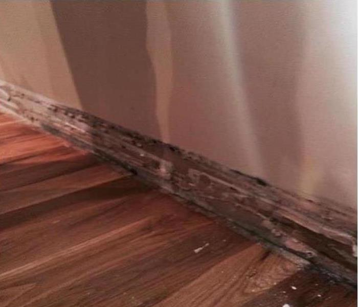 Mold Damage – Hyde Park Before