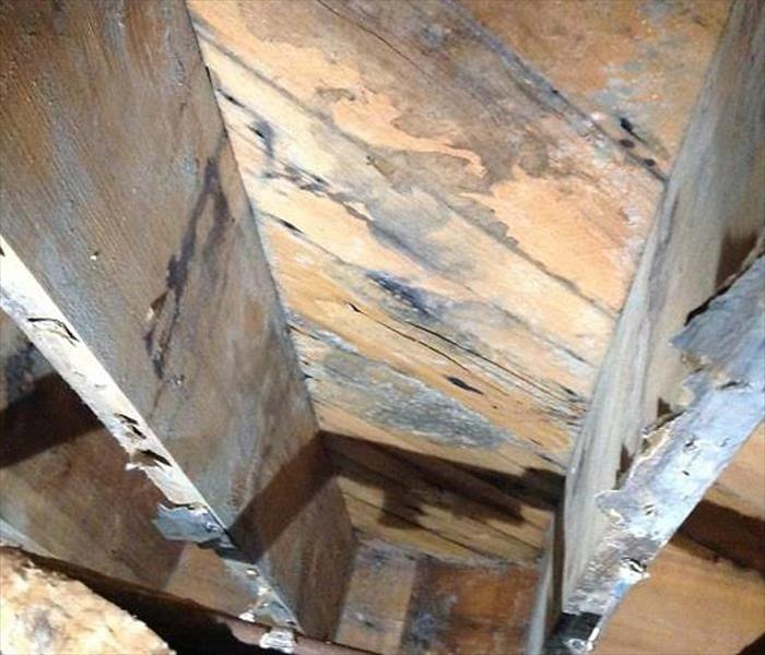 attic wood framing with mold damage