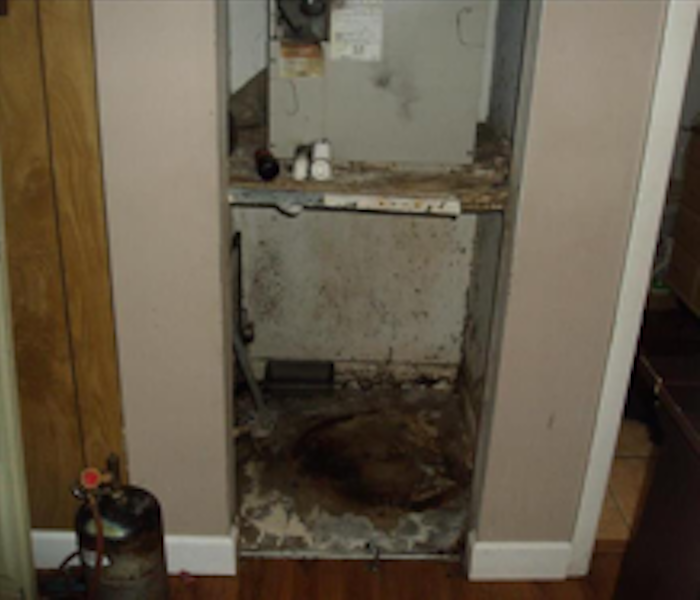 Mold Damage – Armour Square Home