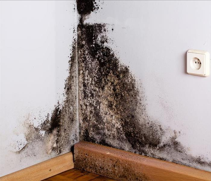 Mold Remediation Mold Damage Is Mitigated with Lower Relative Humidity