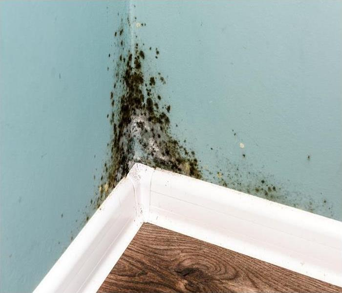 Mold Remediation Removing Mold Damage In Chicago Area Homes