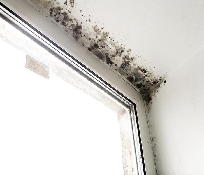 Mold Remediation How To Fight Mold Damage In Bronzeville