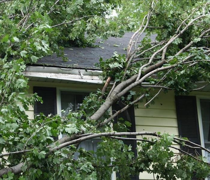 Storm Damage Storms, Winds, Tree Limbs in Your Chicago Home!! Call SERVPRO Fast!