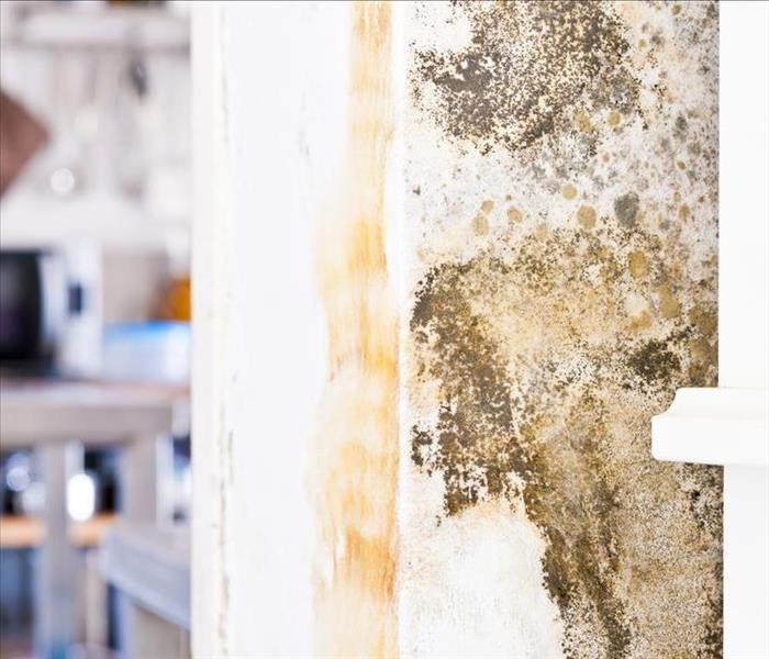 Mold Remediation Avoiding The Hype And Gaining The Mold Damage Remediation Services Your Chicago Home Needs