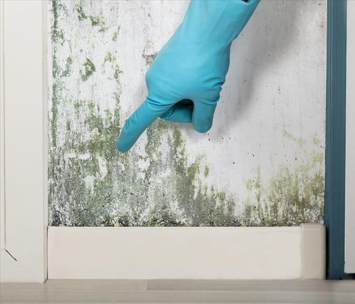 Mold Remediation Get Your Basics Right When You Experience Mold Damage in Chicago