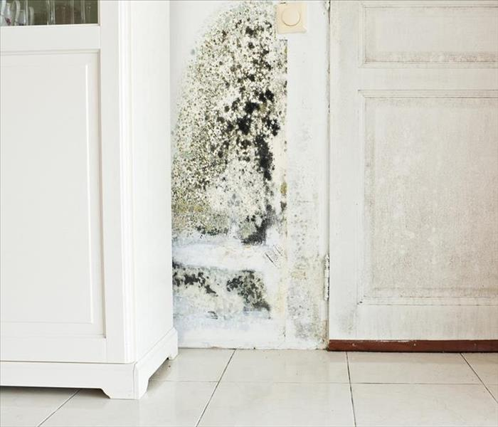 Mold Remediation Remediating Mold Damage to Chicago Homes
